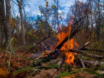 Орлова грязь и прочие лесные радости